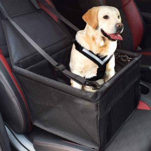 Dog in car basket