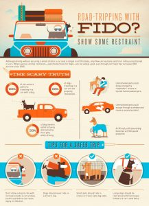 dogs in cars infographic